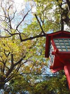 神社緑.jpg